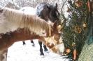 Pferdeweihnachten